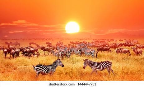 Zebras and antelopes at sunset in african savannah. Serengeti national park. Tanzania. Wild nature of Africa.