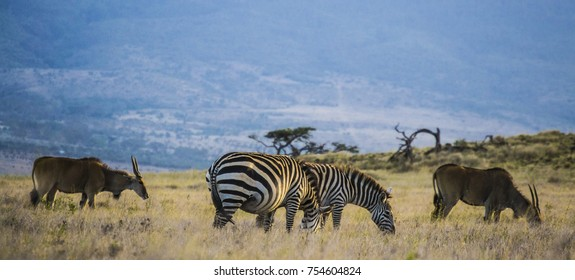 zebras and ilands on the Savannah