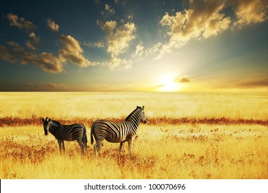 zebras at sunset