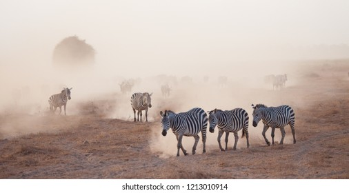 Zebras and Wildebeests Emerging from a Dust Cloud in Africa