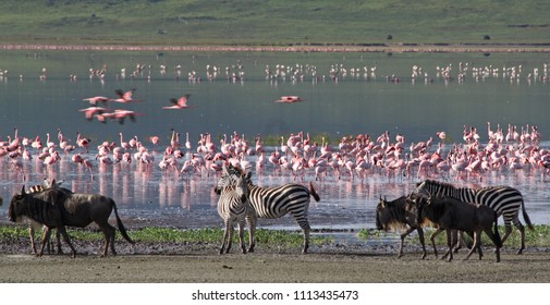 Zebras, wildebeests and flamingos in the Ngorongoro Crater, Tanzania