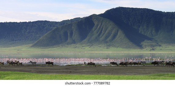 Zebras and wildebeests in the Ngorongoro Crater, Tanzania