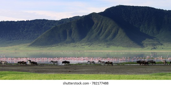 Zebras and wildebeests in the Ngorongoro Crater, Tanzania, flamingos in the background