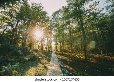Zeda-gordi, Georgia. View Of Paved Forest Path Leading To Canyon Okatse In Sunset Or Sunrise Time. Sun Sunshine With Natural Sunlight And Sun Rays Through Woods Trees. Beautiful Scenic View.