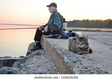 ZELENOGORSK, RUSSIA: Cat is waiting for the fish at June 05, 2018