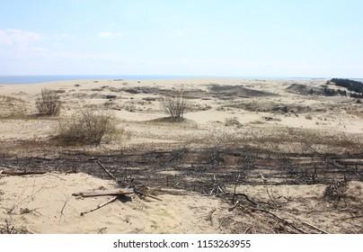 ZELENOGRADSK, KALININGRAD OBLAST / RUSSIA - APRIL 27 2016: Sandy dunes. A distinctive landscape of sand dunes on the Curonian spit, the Kaliningrad oblast