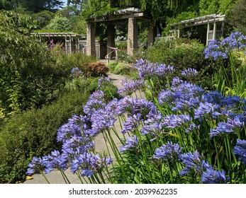 Zellerbach Garden of Perennials, SF Botanical Garden