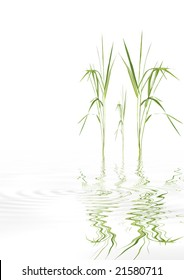 Zen abstract of bamboo leaf grass with reflection over rippled water, against white background.