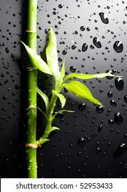 Zen Bamboo over black