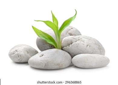 zen basalt stones and bamboo isolated on white