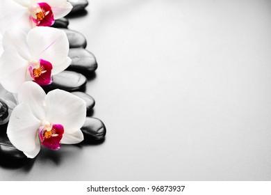 zen basalt stones and orchid with dew