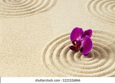 Zen garden with the purple orchids