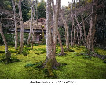 Zen japanese forest