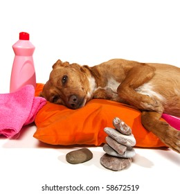 Zen moment and Spa treatment for dog