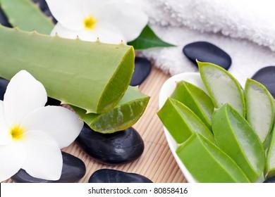 A zen still life of Aloe Vera plants with sliced Aloe Vera plant, white Frangipani flowers and black zen stones