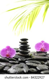 zen still life-zen stones and orchid and green plant