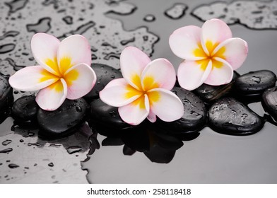 Zen stones and frangipani on wet background