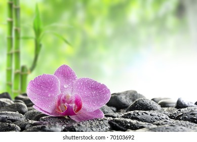 zen stones and  orchid in the water