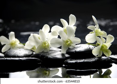 Zen stones and pink orchids with reflection