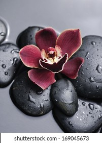Zen stones and red gorgeous orchid