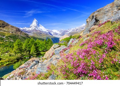 Zermatt, Switzerland. Matterhorn mountain near Grindjisee Lake with flowers in the foreground. Canton of Valais.