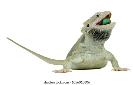 Bearded Dragon Silhouette Images Stock Photos Vectors Shutterstock