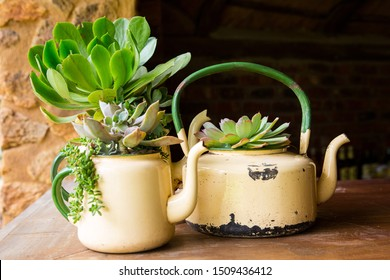Zero waste look after the earth by recycling and upcycling old used goods. Succulents are planted in old kitchen utensils, tea pot and coffee pot. Recycled plant used for decoration in garden or house