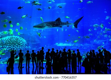 Zhuhai, Guangdong, China- NOV 9, 2017 : Silhouettes of people looking at fish in huge Aquarium, Zhuhai, China.