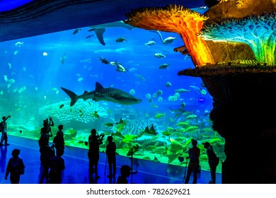 Zhuhai, Guangdong, China- NOV 9, 2017 : Tourist looking at fish in huge Aquarium at the Zhuhai Chimelong Ocean Kingdom Park in Zhuhai, China.