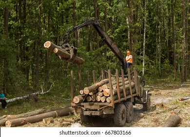 ZHYTOMIR, UKRAINE - June 21, 2017: Unknown workers produce massive logging in Ukraine. Deforestation with use of special equipment. Preparation of a site for illegal criminal amber mining in Ukraine