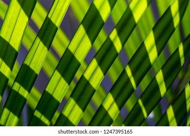 The zig zag of long green palm leave lines in the nature with the light shade and shadow effect like grafic photo.