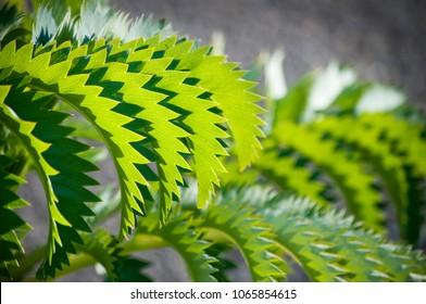 Zigzag pattern on a green plant leaf