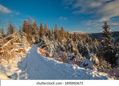 Piękna zima w górach Gorcach- świeży śnieg utworzył niesamowity krajobraz. Beskidy, Polska. - Shutterstock ID 1890003673
