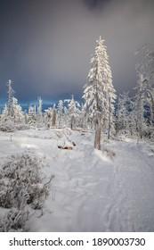 Piękna zima w górach Gorcach- świeży śnieg utworzył niesamowity krajobraz. Beskidy, Polska. - Shutterstock ID 1890003730