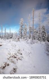 Piękna zima w górach Gorcach- świeży śnieg utworzył niesamowity krajobraz. Beskidy, Polska. - Shutterstock ID 1890003751
