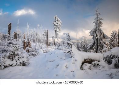 Piękna zima w górach Gorcach- świeży śnieg utworzył niesamowity krajobraz. Beskidy, Polska. - Shutterstock ID 1890003760