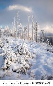 Piękna zima w górach Gorcach- świeży śnieg utworzył niesamowity krajobraz. Beskidy, Polska. - Shutterstock ID 1890003763