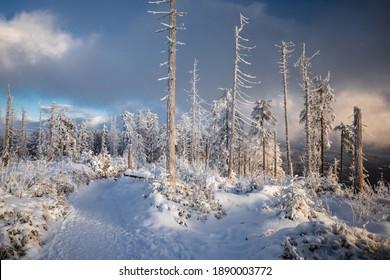 Piękna zima w górach Gorcach- świeży śnieg utworzył niesamowity krajobraz. Beskidy, Polska. - Shutterstock ID 1890003772