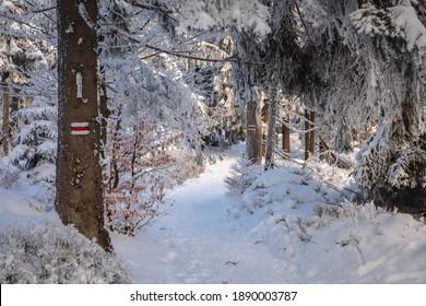 Piękna zima w górach Gorcach- świeży śnieg utworzył niesamowity krajobraz. Beskidy, Polska. - Shutterstock ID 1890003787