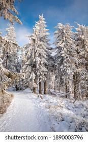 Piękna zima w górach Gorcach- świeży śnieg utworzył niesamowity krajobraz. Beskidy, Polska. - Shutterstock ID 1890003796