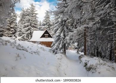 Piękna zima w górach Gorcach- świeży śnieg utworzył niesamowity krajobraz. Beskidy, Polska. - Shutterstock ID 1890003826