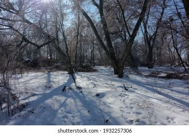 Słoneczny zimowy poranek w lesie - Shutterstock ID 1932257306