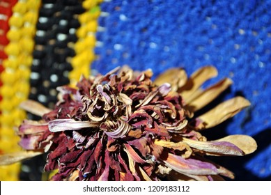 Zinnia bicolor flaccid flower on folk style carpet of the 19th century striped colorful background,  close up detail