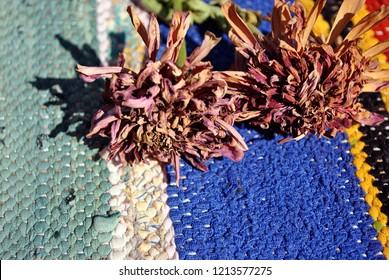 Zinnia bicolor flaccid flowers on folk style carpet of the 19th century striped colorful background,  close up detail