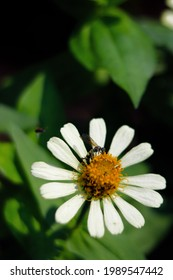 a zinnia flower being surrounded by little bees. more it takes honey essence from zenia flowers. I think this is beautiful because it includes the life of bees and zenia flowers