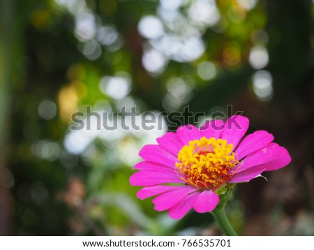 Zinnia Flower not perfect