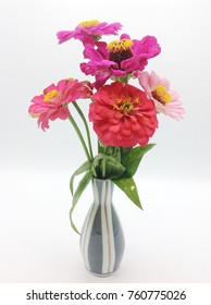Zinnia in a vase on a white background.