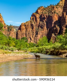 Zion National Park is a southwest Utah nature preserve distinguished by Zion Canyon's steep cliffs. Zion Canyon Scenic Drive cuts through its main section, leading to trails along the Virgin River.