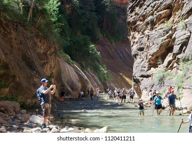 Zion National Park, UT - June 21, 2018: The Virgin River in Zion National Park:  Hikers of various abilities are seen negotiating the wet rocks of the river bed as they go deeper into The Narrows.