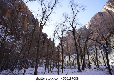 Zion National Park, Utah Frosty Snowy Trees in Wintertime